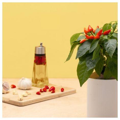 Pflanzenkapsel Mini-Chili