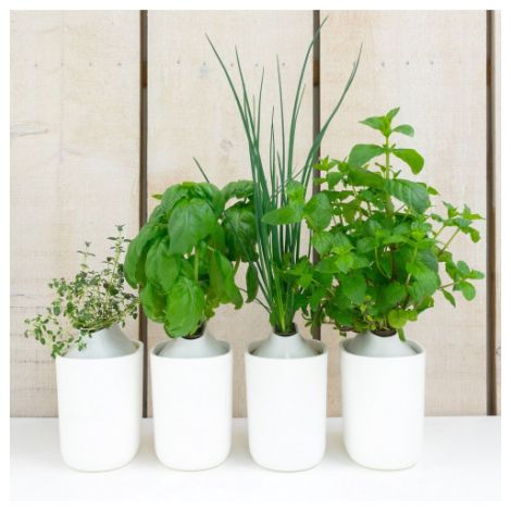 Pflanzenkapsel 4er Set