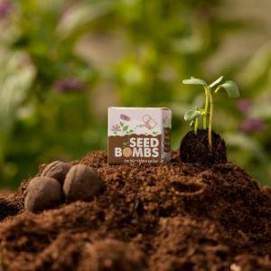Seedbombs Würfel einzeln