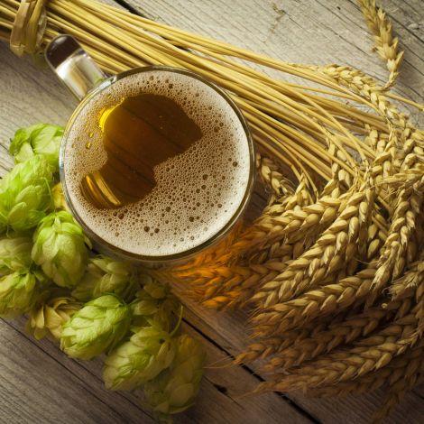 Bier Pflanze